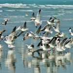 Sea birds in sea beach in coxs bazar