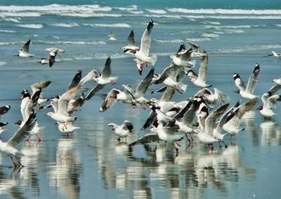 Sea birds in sea beach in coxs bazar