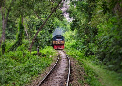 A train journey will go through the jungle of lawachora