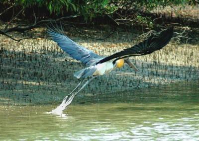 Your will find birds all around in sundarban