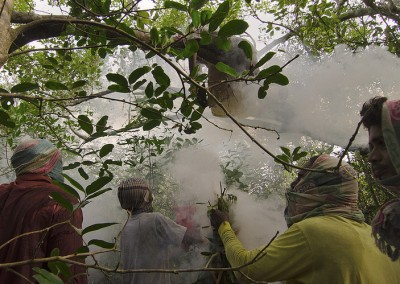 Honey hunting in april is an adventure in sundarban