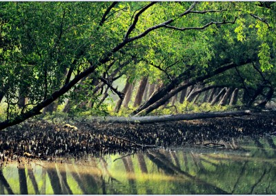 Sundarban is the biggest mangrove forest in the world