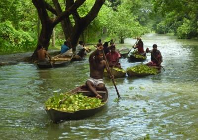 Guava_garen_in Barishal_floating_market_trip