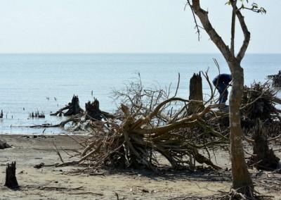 dead life at kokta beach