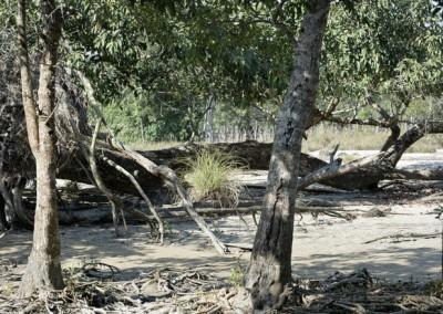 Sundarban tour | Sundarban tour package
