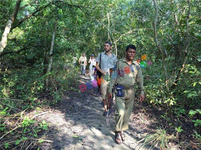Jangule treaking-in Sundarban