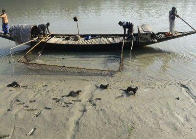 otter fishing bangladesh