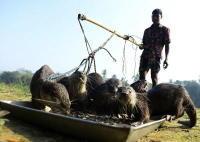 otter gets reword after job done