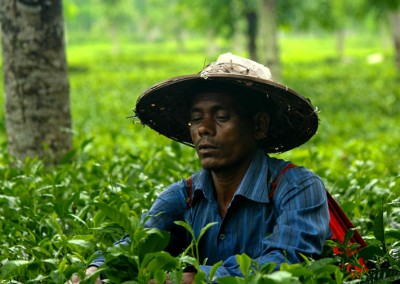 tea-garden-worker-in-sriman